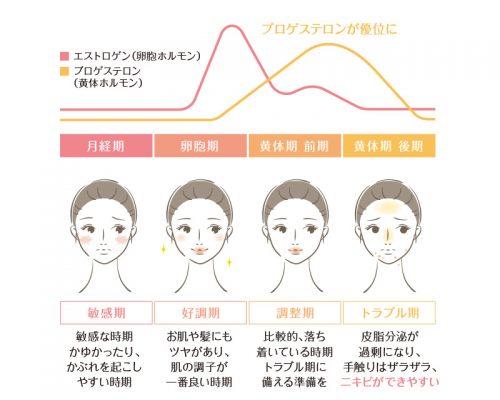 女性ホルモンの分泌量のグラフ