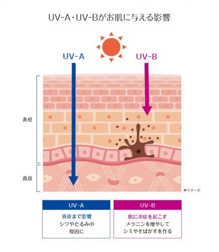 UV-A・UV-Bがお肌に与える影響