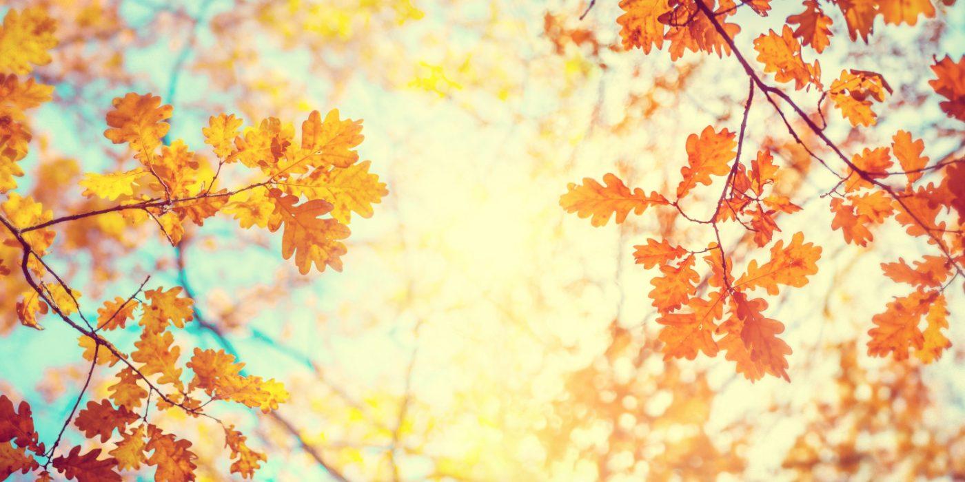 秋のスキンケアイメージ画像